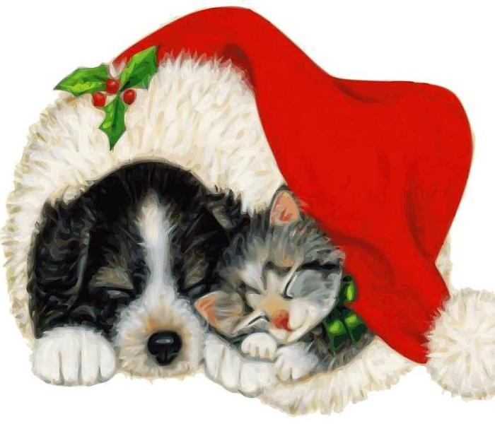 Commercial Pets and Holiday Hazards...