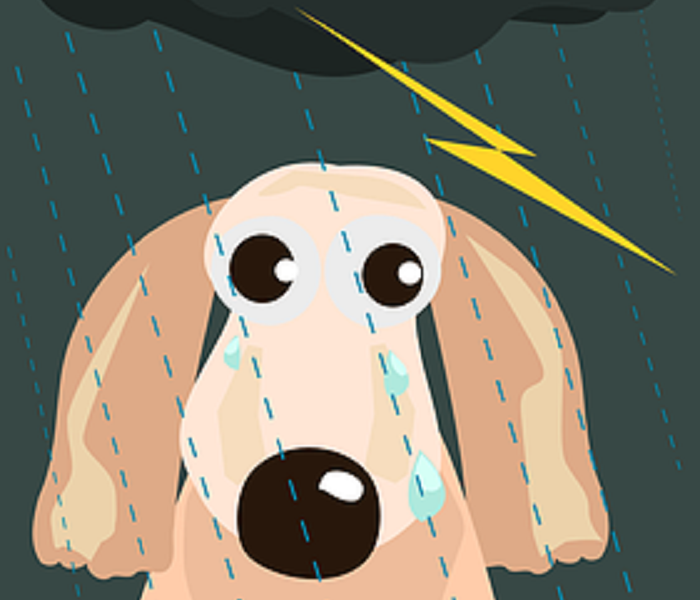 Storm Damage Protect Your Pets During Storms