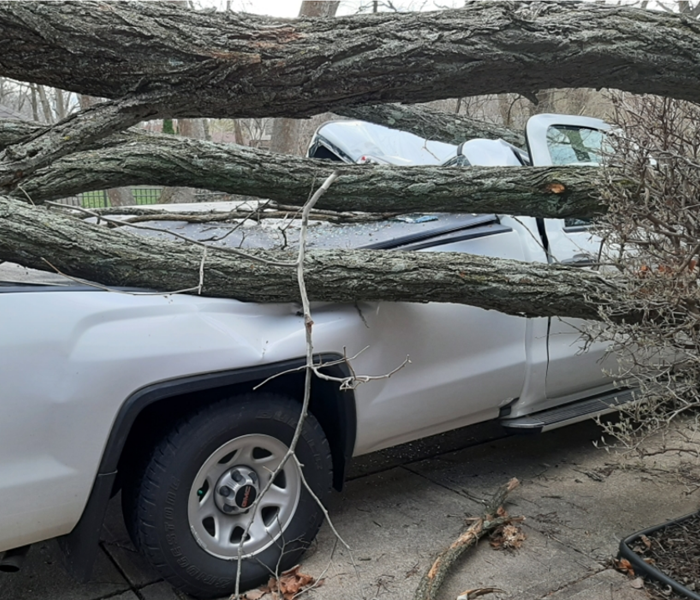 A downed tree on a truck