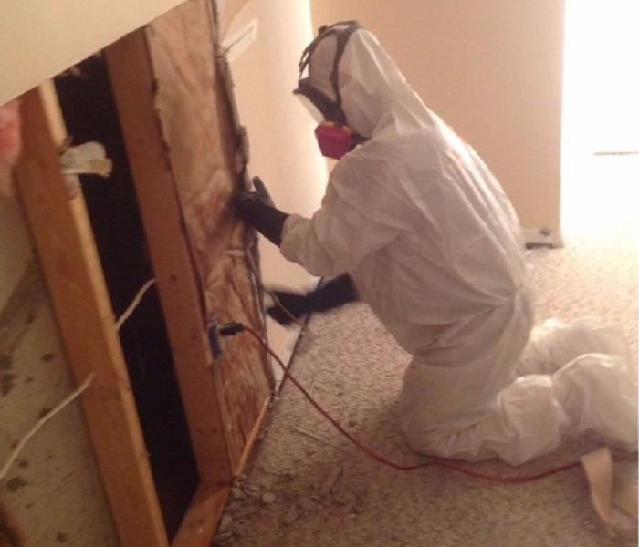 Mold Remediation Take Precautions When Handling Mold Cleanup